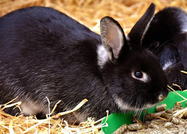Rabbit, Food, Nager, Cute, Fur, Sweet, Wildpark Poing
