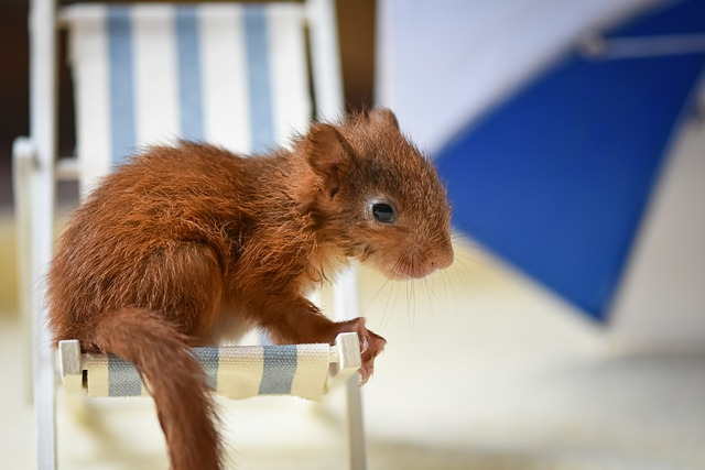 Squirrel, Baby, Nager, Cute, Animal, Nature, Rodent