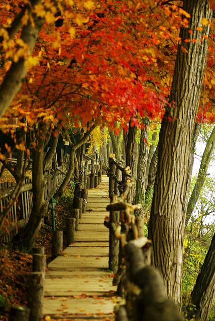 Nami, Autumn, Autumn Leaves, Wood, Pathway, Nature