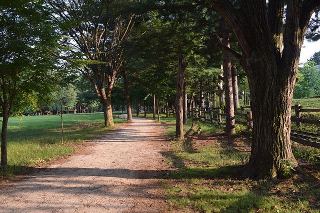 Nami, Gil, Wood, Shadow, Straight Road, Greenery