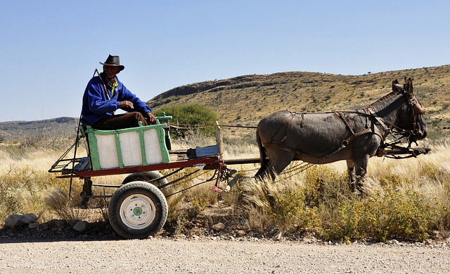 Africa, Namibia, Bauer, Wagon, Donkey, Agriculture