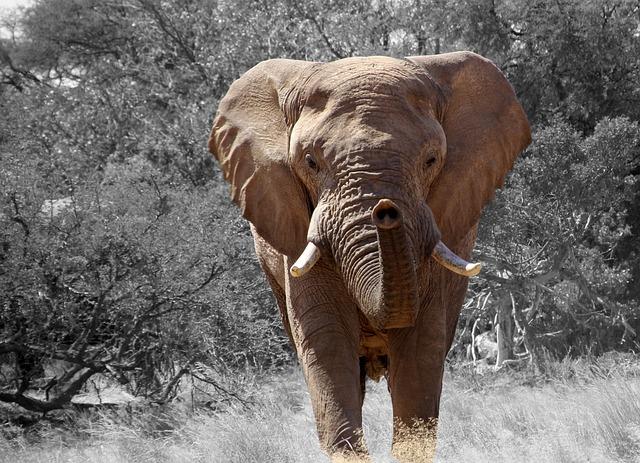 Elephant, Namibia, Africa, African Bush Elephant
