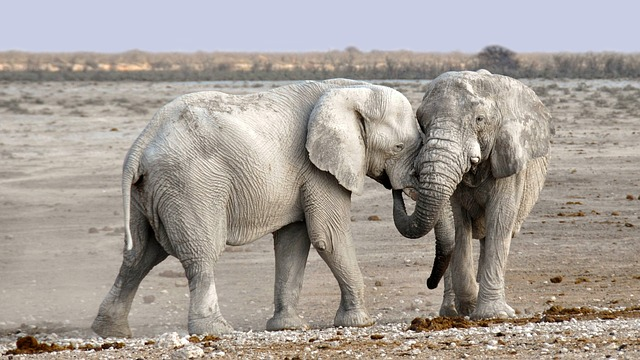 Elephant, Africa, Namibia, Nature, Dry, National Park