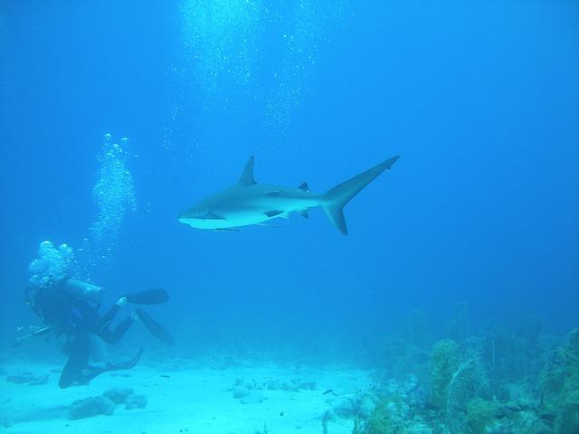 Diving, Dive, Nassau, Bahamas