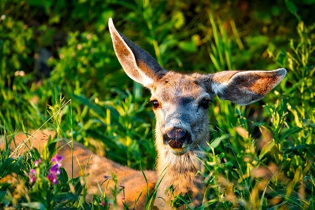 Mule Deer, Animal, Wildlife, Yellowstone, National Park
