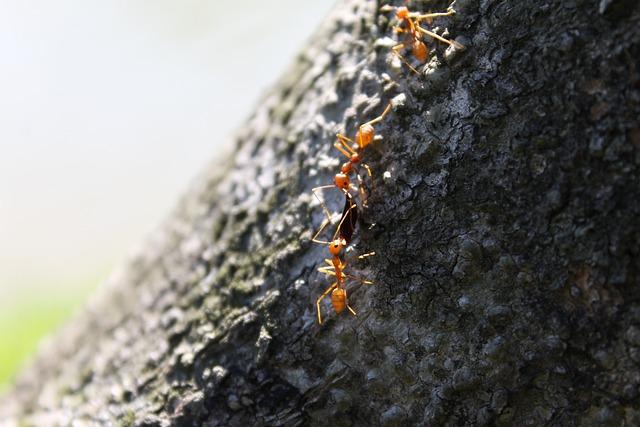 Ant, Tree, Sharing, Insect, Nature, Macro, Natural