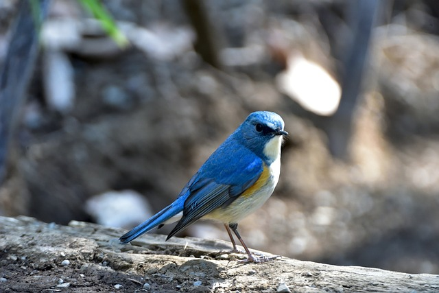 Natural, Outdoors, Wild Animals, Bird