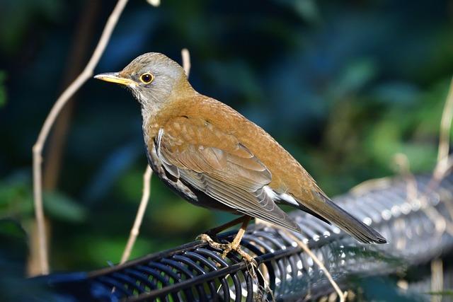Natural, Wild Animals, Bird, Outdoors, Wood