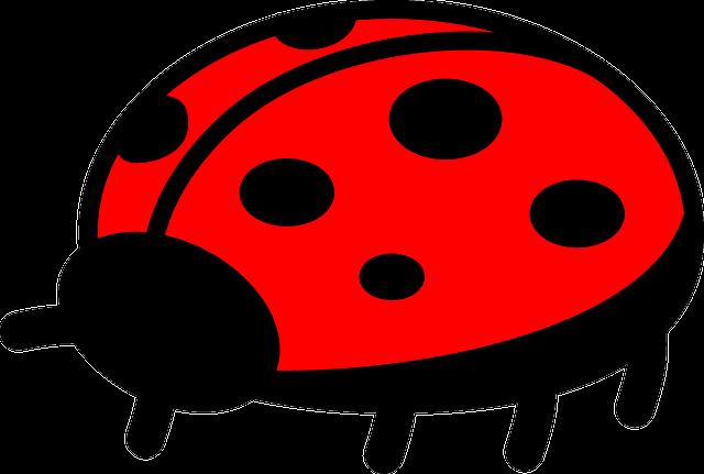 Ladybug, Bug, Flying, Nature, Natural, Biology