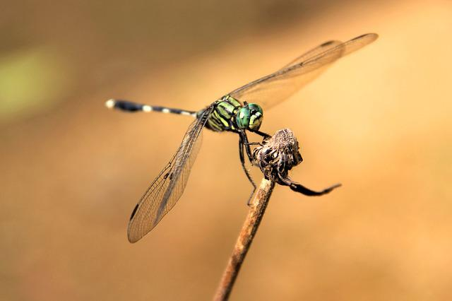 Dragonfly, Bug, Insect, Fly, Wild, Green, Natural