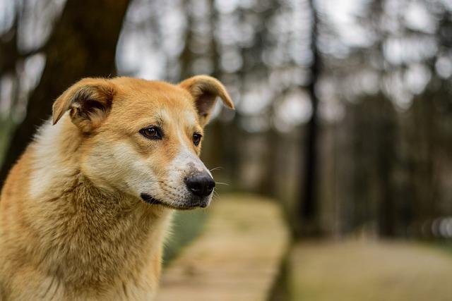 Dog, Natural, Pet, Animal, Portrait