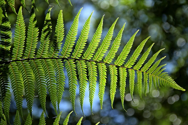 Green, Fern, Leaf, Natural
