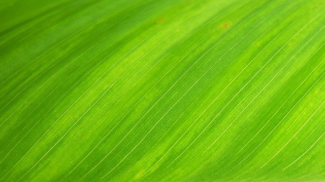 Green Leaf, Natural, Wallpaper