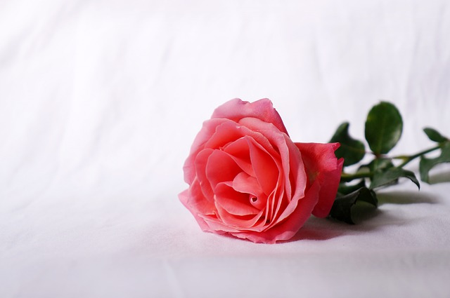 Natural, Roses, Love