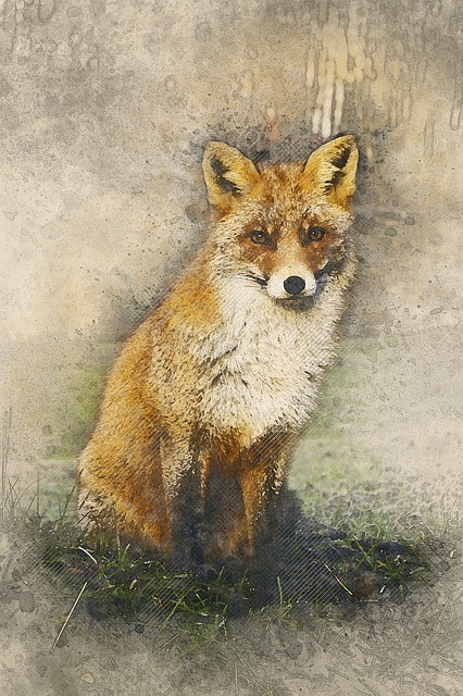 Fox, Wildlife, Nature, Animal, Mammal, Natural, Red Fox