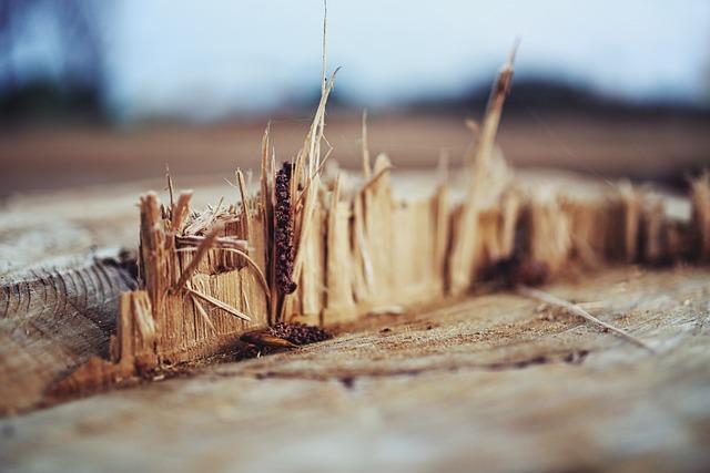 Wood, Shreds, Tree, Natural, Wooden, Nature