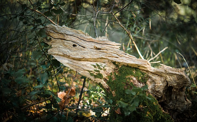 Wood, Dead Tree, Forest, Natural Sculpture, Nature