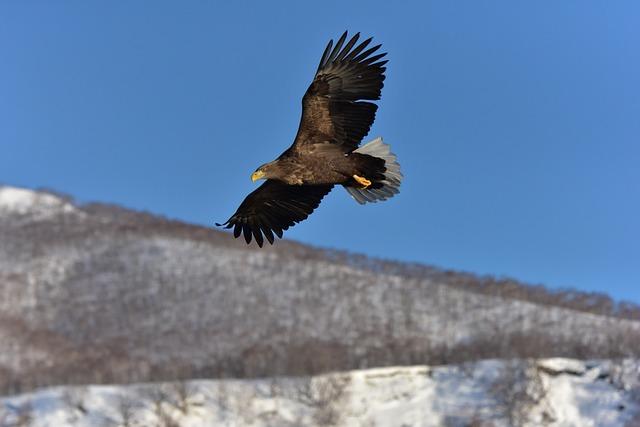 Natural, Outdoors, Snow, Sky, Wild Animals, Bird