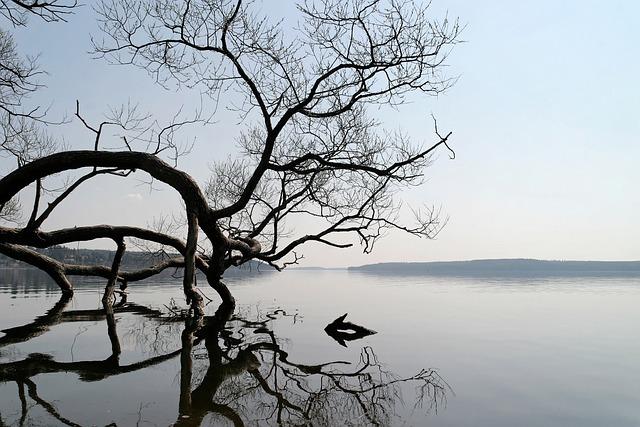 Lake, Landscape, Water, Tree, Natural Water, Mirroring