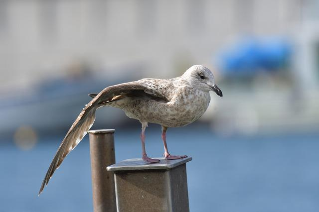 Waters, Bird, Natural, Wild Animals, Seguro Seagulls