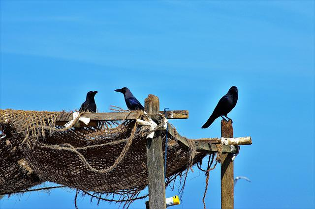 Raven, Blue Sky, A Fishing Village, Nature, Birds, Sky