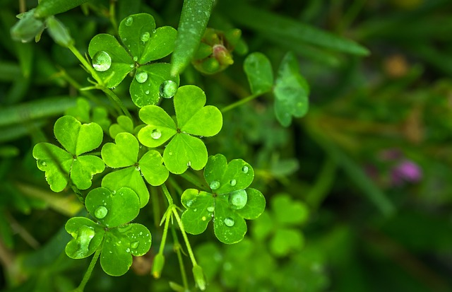 Leaf, Nature, Green, Abstract, Plants, Trickle, Dew