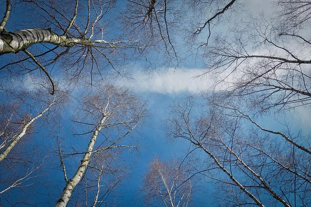 Trees, Birch, Nature, Tribe, Wood, Aesthetic, Bark