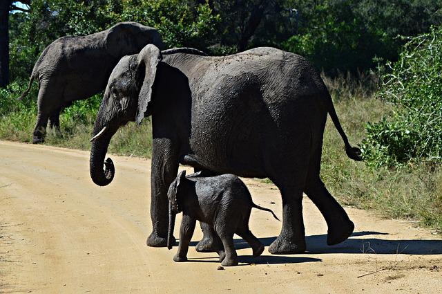 Elephants, Young, Wildlife, Nature, Animals, Africa