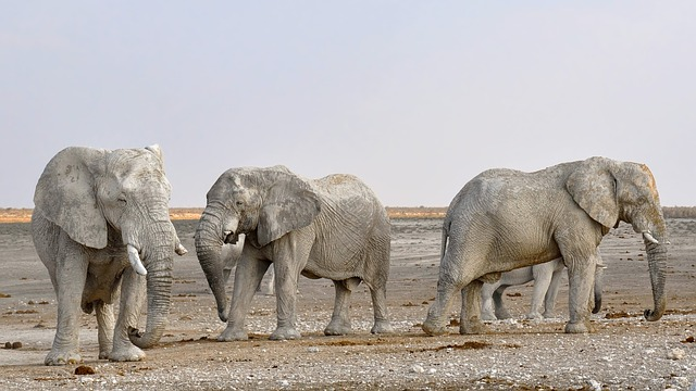 Elephant, Herd Of Elephants, Africa, Namibia, Nature