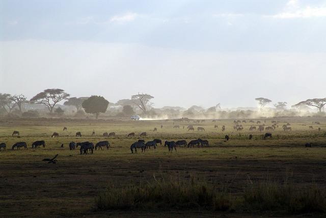 Safari, Kenya, Africa, National Park, Nature
