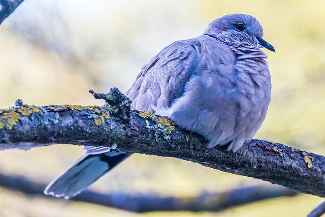 Turtledove, Ave, Bird, Nature, Animal, Tortola, Fauna