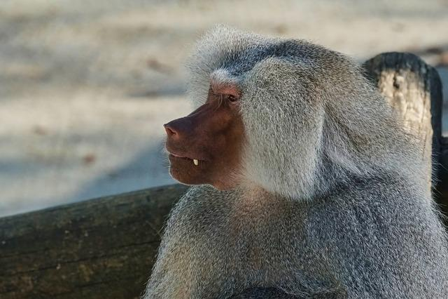 Mammal, Animal World, Animal, Baboon, Nature, Monkey