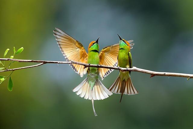Fly, Animal, Nature, Baby, Bird, Natural