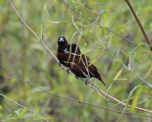 Wildlife, Bird, Nature, Animal, Outdoors, Wild, Tree
