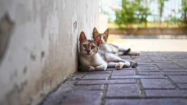 Cute, Animal, Cat, Looking, Nature