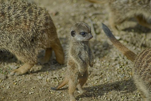 Wildlife, Mammal, Nature, Animal, Cute