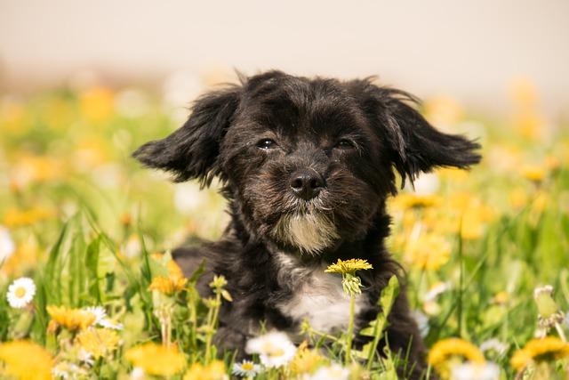 Cute, Nature, Animal, Grass