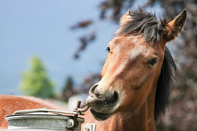 Horse, Horse Head, Water Tank, Thirst, Animal, Nature