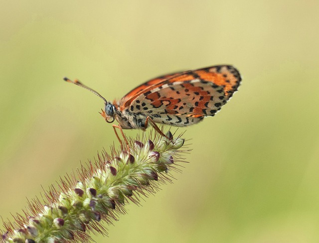 Insect, Nature, Butterfly, Wildlife, Animal