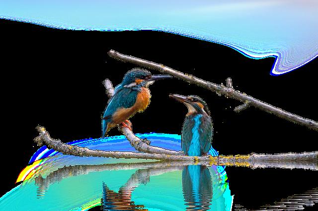 Kingfisher, Landscape, Isolated, Birds, Animal, Nature