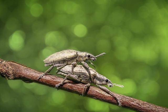 Bug, Insect, Animal, Macro, Nature, Magnification