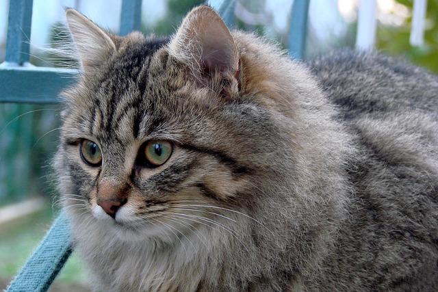 Animal, Cat, Mammal, Cute, Nature