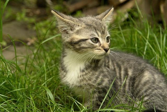 Animal, Cute, Nature, Little, Mammal