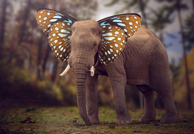 Nature, Wildlife, Outdoors, Animal