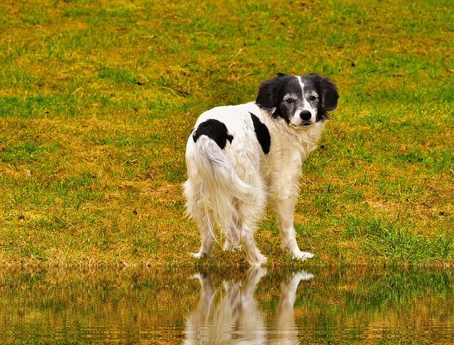 Dog, Mammal, Animal, Grass, Pet, Cute, Nature