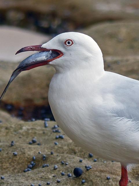 Bird, Nature, Sea, Wildlife, Animal, Seashore, Water
