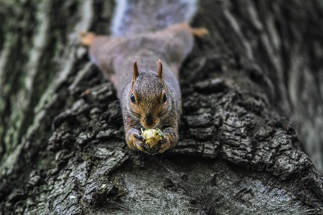 Animal, Animal Photography, Nature, Squirrel