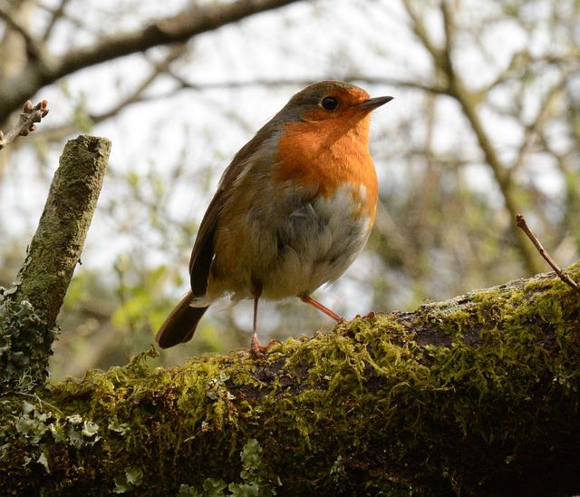 Wildlife, Bird, Nature, Tree, Animal, Outdoors