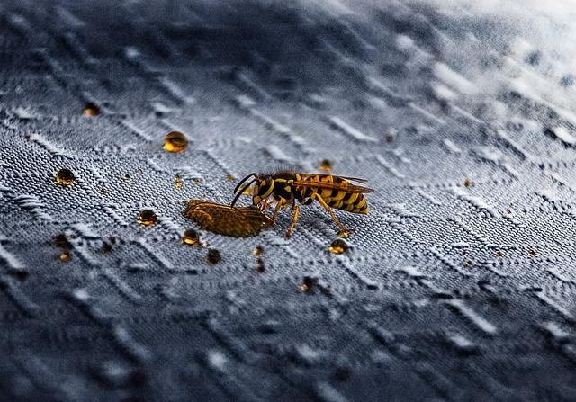 Nature, Insect, Animal, Summer, Animal World, Wasps