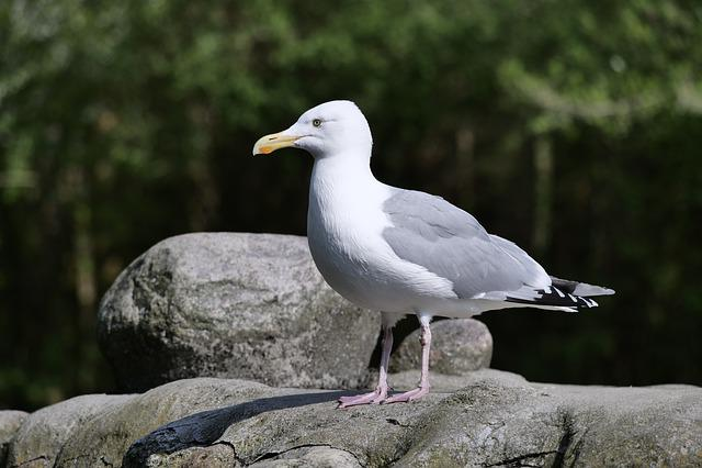 Gull, Bird, Animal World, Nature, Standing